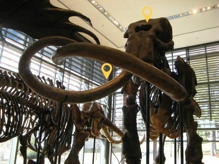Mammoth Cloning