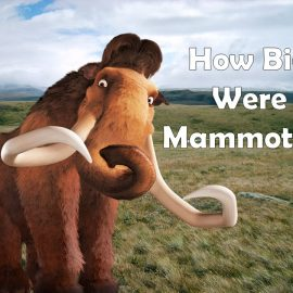 How big were mammoths?