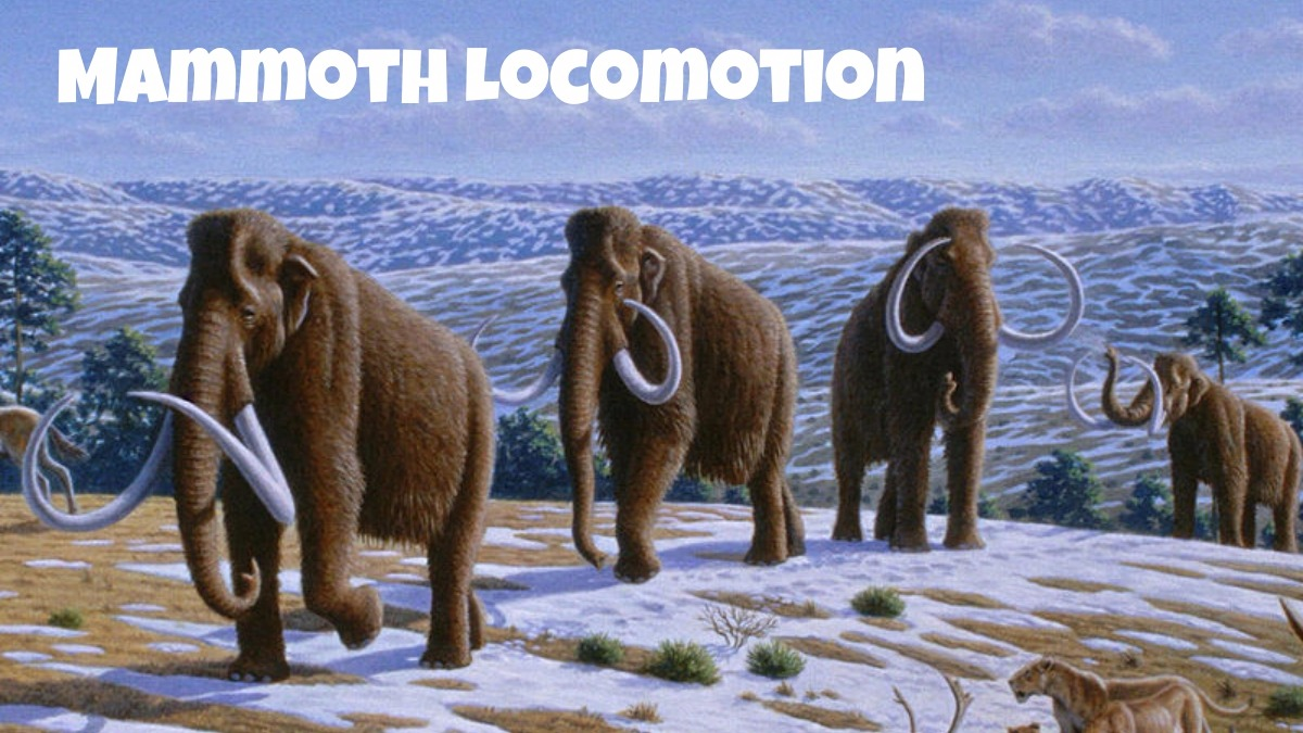 How did mammoths walk?