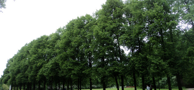 Heritage Trees: International Research and Registries