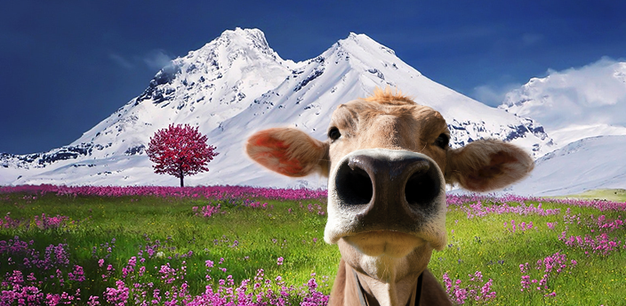moodle cow in a field in front of snowcapped mountains