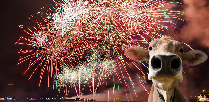 The Moodle cow in front of a fireworks display