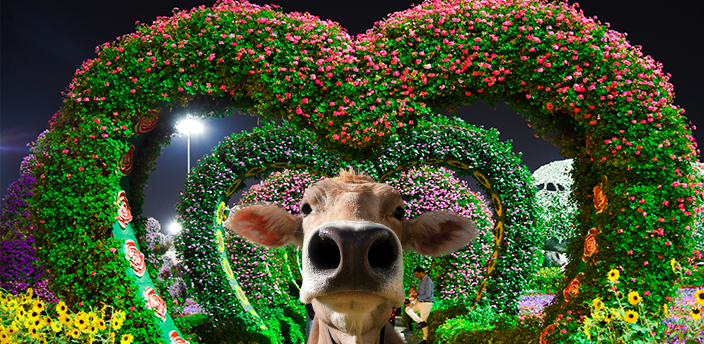 The Moodle cow in front of heart-shaped topiary