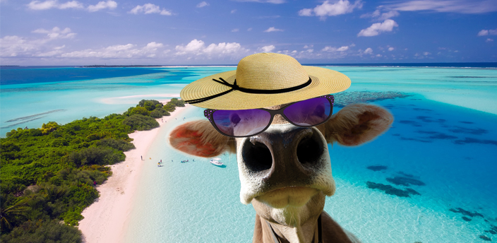 Aerial view: a point piece of island at the left surrounded by a tight beach and light blue water. Blue sky with white cloud in the background and in the front layer at the right, the bust of a caw with purple sunglasses and a straw-hat.