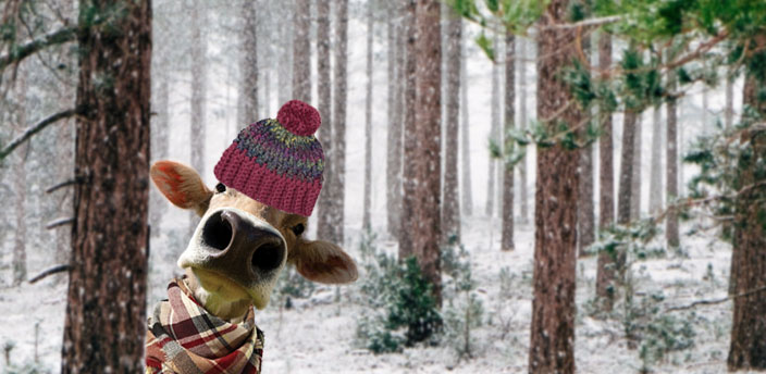 woods cover in snow background and a cow with a hat and scarf.
