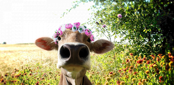 moodle cow with flower crown in a field of wildflowers