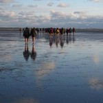 "Wadlopen ""mud walking"" from Holwerd (the Netherlands) to the island of Amaland at low tide."