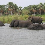 Elephants at Liwonde National Park, Malawi.