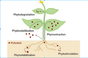 Fig 1: Different pathways of Phytoremediation