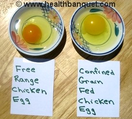 Fig 1. Comparison of yolks in eggs produced by grass-fed chickens (left) and grain fed chickens (right). Paige, E. (2009, 13 September). Free range eggs versus confined grain fed eggs. Health Banquet. Retrieved from http://www.healthbanquet.com/free-range-eggs.html)