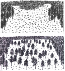 [Untitled Diagrams of Clearcutting and Partial-Harvesting]. Retrieved November 10, 2014, from: http://www.nrs.fs.fed.us/fmg/nfmg/fm101/silv/index.htm