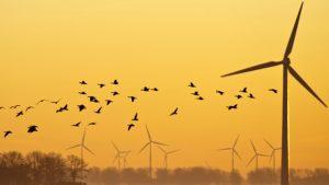 Birds flying over a field at dawn in winter. J. Marijis. Shutterstock