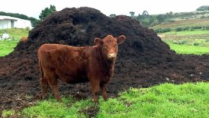 extra_large-1464357551-2349-manure-from-antibiotic-free-cows-still-contributing-to-resistance