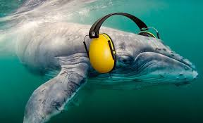 Drilling noises  can damage whales' hearing permanently.  http://www.coastalreview.org/2016/05/14341/