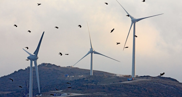 Wind turbines pose a greater threat to threatened species, like the California condor.