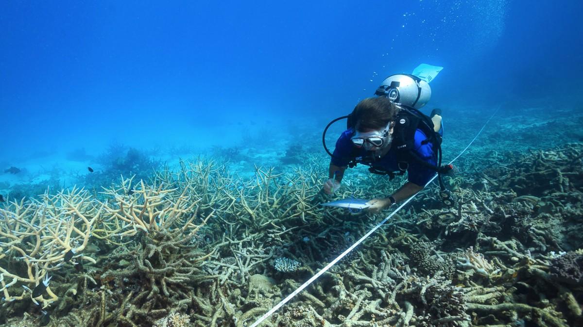 Noaa national ocean service education corals betting kempton betting odds