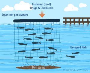 Aquaculture – Debating Science