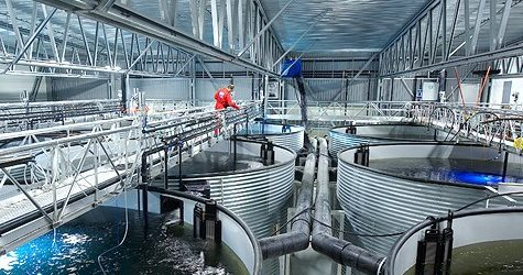 Solutions to Unsustainable Salmon Farming Practices – Debating Science