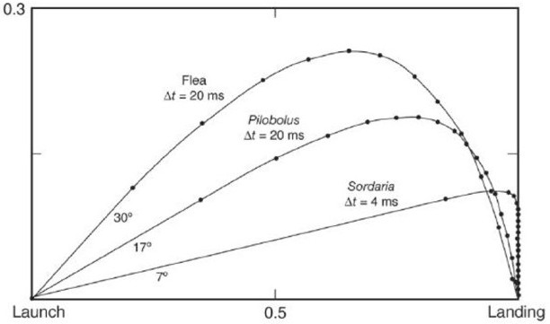 projectile range vs launch angle 2012-5-22 range of a projectile, including air resistance  throw a projectile with a speed v at an angle q  the choice of q which maximises the range of the projectile.