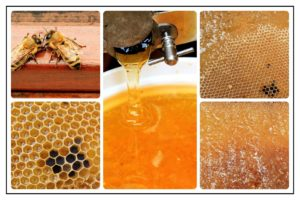 Collage of bees and honey combs